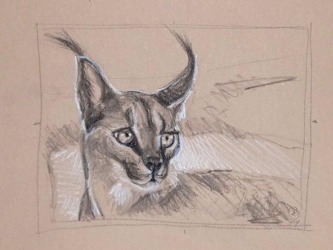 Caracal - Tanya Roland - Drawing